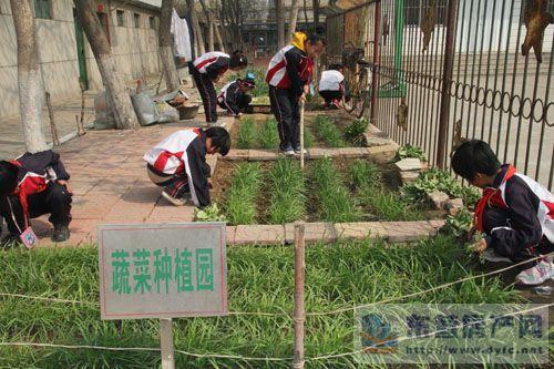 东营实验学校开展红领巾种植园特色活动