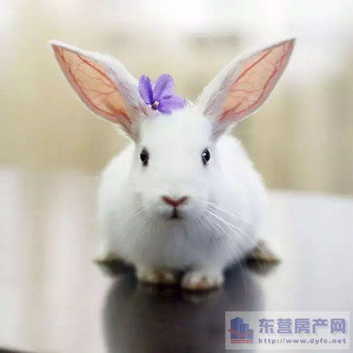 水果手工制作小动物兔子